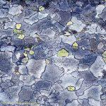 lichen images