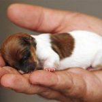 pup pregnancy