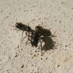 ants bite baby