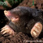 mole in mouth