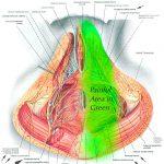 pelvic nerves pain
