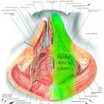 pelvic nerve pain