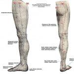 leg pictures