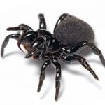 picture of spider