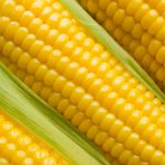 pictures of corn