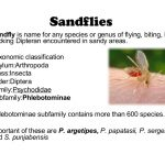 insects that bites