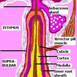 hair follicle tumor
