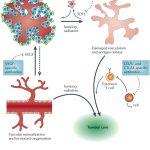 immune modulating drugs