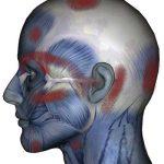sinuses behind ears