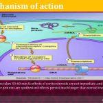 what is prednisone